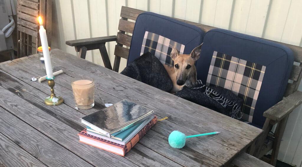 utomhusfrukost tillsammans med hund, en whippet